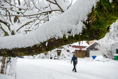 snowy moss (Ben McLeod) Tags: nikki oregon portland sellwood winterstorm snow