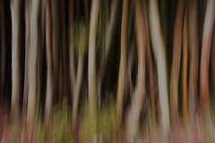 Bamboo (mara.arantes) Tags: bamboo bambuzal canebrake longexposure nature naturaleza natureza brasil digital abstract abstrato