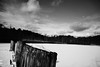 DSC04036.jpg (The Active Shooter) Tags: daytime turtlepond bnw dock