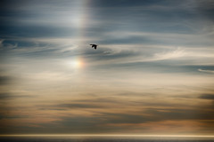 Oh. (nosha) Tags: ca california blue sun sundog sunset ocean seascape beauty beautiful point lobos pointlobos avian light bird nikon nikkor d600
