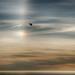Oh. (nosha) Tags: ca california blue sun sundog sunset ocean seascape beauty beautiful point lobos pointlobos avian light bird nikon nikkor d600