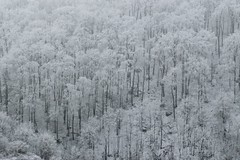 Contrast (A. Tadic) Tags: black white snow ice mist fog tree trees hill mountain forest woods nature world life serbia