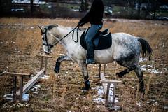 GrifGallops01312017-2 (liz-stout) Tags: gallop griffin horse