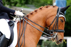 IMG_1013 (dreiwn) Tags: horse pony pferde pferd equestrian horseback reiten horseriding dressage hnger 2015 reitturnier dressur pferdekopf dressuur junioren ridingarena pferdesport doublebridle reitplatz reitverein pferdehnger kandare turnierreiten dressurprfung ldressur