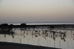 IMG_2674 (DafneCholet) Tags: park parque red sea naturaleza mountains sunrise reflections boat mar rojo holidays barco photographer natural redsea egypt el amanecer mangrove desierto egipto vacaciones sheikh sharm reflejos fotografo manglar