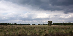 Dark clouds over a swamp area (*Gitpix*) Tags: light sky panorama plants tree nature netherlands grass clouds landscape licht spring sony natur pflanzen himmel wolken tranquility swamp gras marsh landschaft weite baum cloudscape marshland darkclouds springtime frühling niederlande sumpf ruhe wideness degrootepeel sumpfgebiet dunklewolken wolkengebilde nationalparkdegrootepeel swamparea nex7 sel24f18z lushfoloiage