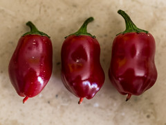 P7015341 (zullo_stefano) Tags: red food orange black macro green colors pepper zuiko hotpepper jalapeño blackhungarian zuiko50mmmacro olympuse5