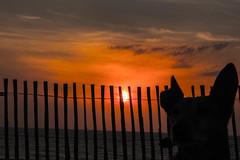 Bitxo Atardecer (Garimba Rekords) Tags: sol atardecer mar retrato playa perro nubes animales francia ocaso ondres