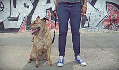 071 (odish3) Tags: dog graffiti sneakers pitbull converse graffitti fdrskatepark conversesneakers pitbullmix