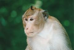 Sihanoukville, Cambodia (Thierry Jaspart / Andalltha) Tags: travel wild photography monkey coast asia cambodia sihanoukville minolta dynax thierry andalltha jaspart