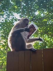 Monkey Railay beach, Thailand - Affe