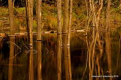 Baumspiegelung (grafenhans) Tags: zeiss see licht sony carl 55 landschaft wald bäume spiegelung baum slt 35135 grafenwald slt55