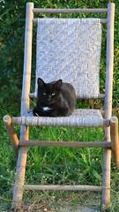 tranquillo e beato sulla sedia - Magnadorsa d'Arcevia (walterino1962) Tags: gatto sedia ramifoglie erba luci ombre riflessi magnadorsadaarcevia