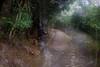 山中遊035 (kingston Tam) Tags: moss grass path hillside hiking field bigtree oddtree garden nature fujifilmxt1