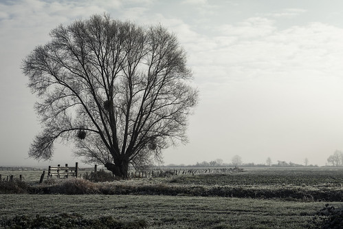 The Tree in the Fields - Beaune