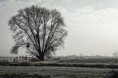 The Tree in the Fields - Beaune (Remy Carteret) Tags: canon 5d mkii mk2 markii france eos remycarteret rémycarteret beaune bourgogne burgundy canon5dmarkii canon5dmark2 canoneos5dmarkii canoneos5dmark2 5dmark2 5dmarkii mark2 canon5d color colors couleurs beaunechallanges brume brumes challanges arbre arbres tree trees mist haze 21200beaune 21200 champs fields champ field