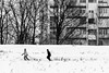 Winter in the city. (Originalni Digitalni) Tags: slavonskibrod cold fun hladnoća sanjke sled snijeg snow streetphotography walk zabava šetnja sleds boys winter zima blackandwhite monochrome outdoor