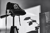 mosquito II (glookoom) Tags: bw blackandwhite gris contraste lumière light shadow ombre fleur mosquito appareilphoto trepied