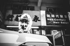 On the Hood (Ding Yuin Shan) Tags: jordan cat hongkong kitty street