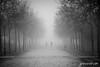Carreras en la niebla (jesus pena diseño) Tags: niebla fog jpena jpenaweb jesuspenadiseño blackandwhite weather winter bicycle men trees race madrid polvoranca spain