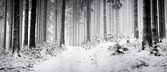 A winter's day (desomnis) Tags: winter snow cold woods forest monochrome bw trees nature landscape winterforest winterly forestpath woodland landscapephotography landschaft mühlviertel austria österreich upperaustria oberösterreich desomnis canon135mmf20 135mm canon6d panorama blackandwhite blackwhite