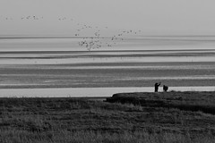 Casting to the sky... (zapperthesnapper) Tags: sony sonyrx100 riverkent fishing fishermen casting cumbria estuary river sonycybershot sonyimages coastline blackandwhite monochrome mono coast