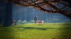 Monza park .3 (nicolò parasole) Tags: pentax k3 da18270 park wood forest colors travel animal dog sun light