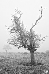 l'arbreDxOFP AdoxCHS100II_DSF2852 (mich53 - thank you for your comments and 3,5M view) Tags: givre froid hiver saisons campagne solitude brouillard brume arbre monochrome «noir blanc» explore «arbre mort» silhouette 4winter paysage france îledefrance mantois xt1 xf1655mmf28rlmwr fujifilm frosted cold winter seasons campaign fog mist tree blackwhite deadtree landscape helada frío invierno temporadas campaña soledad niebla árbol monocromo blancoynegro explora árbolmuerto silueta explorar paisaje frost kalt jahreszeiten kampagne einsamkeit nebel baum einfarbig explores toterbaum erkunden landschaft 霜 冷たいです 冬 季節