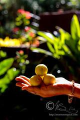 When life gives you lemons... (Sia Krishna) Tags: lemons indianlemons citrus foodstyling food foodie foodblogger foodphotography foodblog stilllife foodstilllifephotography