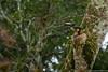 47. Around Palenque, Chiapas, Mexico-5.jpg (gaillard.galopere) Tags: america amérique animaux chiapas couleur gaillardgalopere mex mx mexico mexique palenque travel voyage animal animals animauxsauvages ave bird bright brillant brillante claro color colorful coloré green loverlander lustroso oiseau overland overlanding toucan verde vert viesauvage wild wildlife