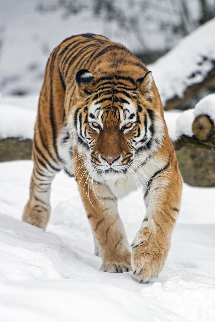 Www Bing Com1 Microsoft Way Redmond: The World's Best Photos Of Amur And Zoo