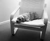 Snoozing (VirtualWolf) Tags: animal australia bw beanie dog domesticated equipment fujifilmx100s newsouthwales ourhouse places sydney techniques