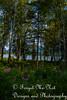 IMG_8528 (Forget_me_not49) Tags: alaska alaskan wasilla lakes lucillelake boardwalk pier sunrise waterways