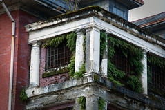 Nature Reclaims (Kelley Cheung) Tags: reclaimed nature reclaims abandoned forgotten riverviewhospital ferns window