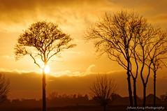 Colour Locale (Johan Konz) Tags: winter sunset orange sky clouds rural trees outdoor landscape atmosphere nikon d90 purmerland waterland netherlands tree sun silhouette bokeh