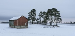 Country Red Barn (a56jewell) Tags: a56jewell barn red redbarn jan winter snow pinetrees norfolkcounty