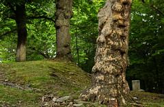 A Study Of Three (2bmolar) Tags: pottsville schuylkillcounty