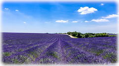 AL-Lavande-Valensole-20150626-041.jpg (Shoot Enraw) Tags: champs provence 26juin lavandes valensole 18200mmf3556 1116mmf28