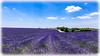 AL-Lavande-Valensole-20150626-041.jpg (Shoot Enraw) Tags: champs provence 26juin lavandes valensole 18200mmf3556 1116mmf28