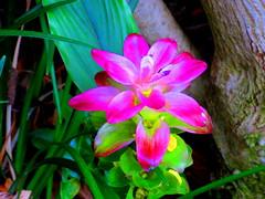Honolulu Hawaii - June 2015 - 40 (Jimmy - Home now) Tags: daddy happy hawaii dad waikiki happiness honolulu waikikibeach