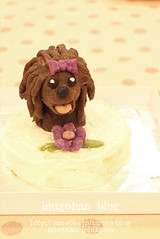 Your dog figure cake (INUGOHAN_WORLD) Tags: dog dogs poodle toypoodle dogcake cakeclass dogsweets figurecake dogrecipes