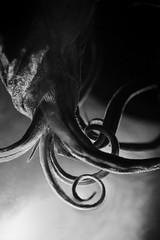 Is It the Kraken? (FTonyC) Tags: ocean sea blackandwhite macro monochrome squid horror seamonster giantsquid pelagic kraken benthic minolta50mmf28