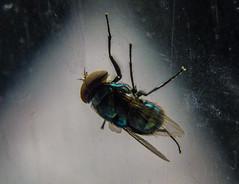 Fly on the window (uisllc7) Tags: yah