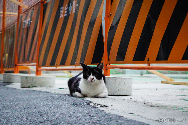 Today's Cat@2015-07-09