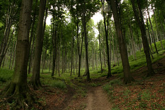 Magas-Bakony (Cini S) Tags: park tree forest landscape outdoor serene beech