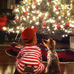 Christmas Pals (Farmernudie) Tags: christmas holiday tree lights dog puppy terrier holidays warmth love happy happiness home friends pals