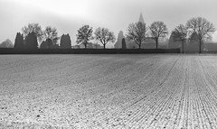 White and black (Jorden Esser) Tags: building cemetery church cross fencefriday field hff monochrome snow trees nederlandvandaag silhouette silhouettes