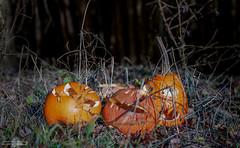 Decomposing remnants of Halloween (Cle Manuel) Tags: halloween pumpkin kürbis wald forest woods creepy scary mold schimmel sony alpha