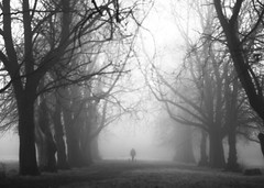 a man and his dogs (matthewheptinstall) Tags: wakefield westyorkshire trees park morning fog mist winter walk lonefigure signature gothic ghostly lone
