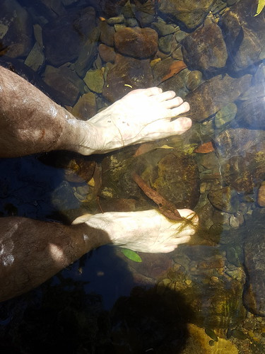 Cooling my feet in the Barham river at Marriners Falls picnic ground